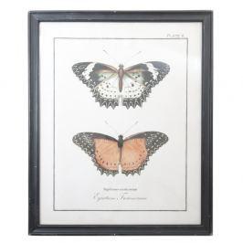 Obraz Clayre & Eef Butterflies, 65x80cm